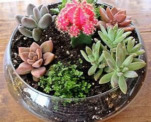 Succulent Planters Dora39s Daily Dish