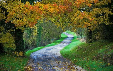 landscape, Nature, Path, Fall, Forest, Grass, Leaves ...