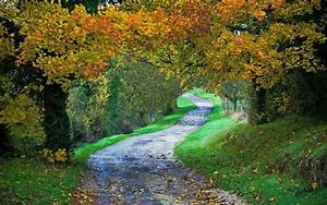 Landscape, Nature, Path, Fall, Forest, Grass, Leaves