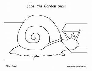 Snail Labeling Page  Younger Students