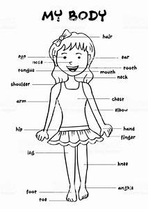 My Body Educational Info Graphic Chart For Kids Showing