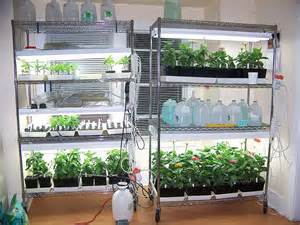 grow your own indoor gardening with wire shelving the