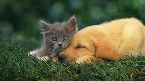 friends of cats wallpaper kitty cat friends grass lawn desktop