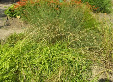 http://luirig.altervista.org/schedenam/fnam.php?taxon=Brachypodium+pinnatum