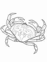 Crab Coloring Horseshoe Printable Krab Kolorowanki Crabe Malvorlagen Dzieci Dla Crabs Bestcoloringpagesforkids Dungeness Imprimer Kindergarten Coloriage Fish Crustacean Exclusive Clipart sketch template