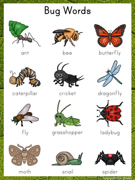 writing center word list bug words  images