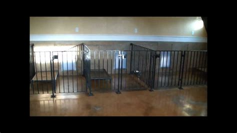 indoor dog facility design tips  ideas  prevent pests youtube