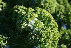 Gemüse Im Winter : gem se im winter 2 tipps ~ Pilothousefishingboats.com Haus und Dekorationen