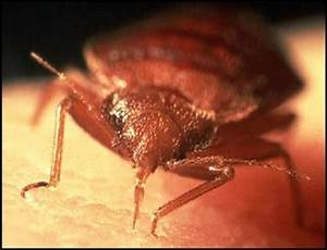 warning signs a needless nationwide bed bug epidemic With bed bug epidemic