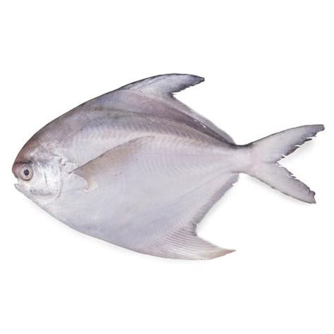 identify  commonly eaten fishes  india