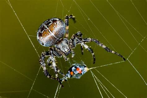 araign馥 dans la chambre la toile de l araignee 28 images photo araign 233 e et sa toile coloriages l araign 233 e tisse sa toile a imprimer graphisme tracer des