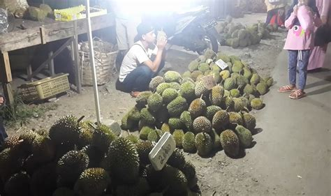 musim durian  harga durian  buah  sekadau