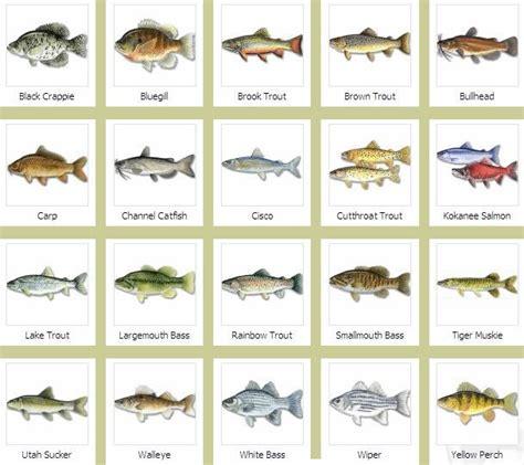 fish names brandedhub fish species