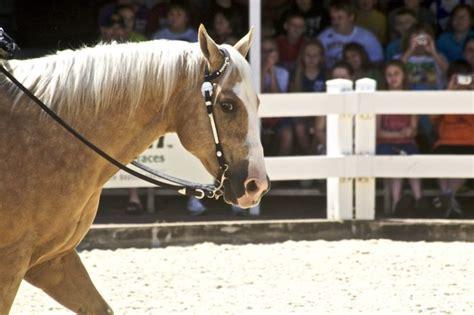 quarter horse american lifespan horses long average