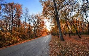 Autumn road park trees landscape