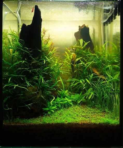 shrimp tank aquascape 17 best images about nano s on led grow lights