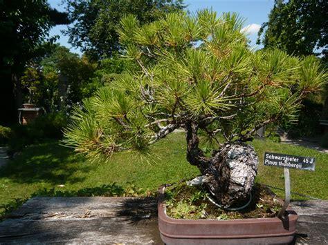 Botanischer Garten Wien Bonsai by Botanische Spaziergaenge At Thema Anzeigen 27 7 2013