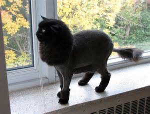 cat haircut 50 cats with haircuts
