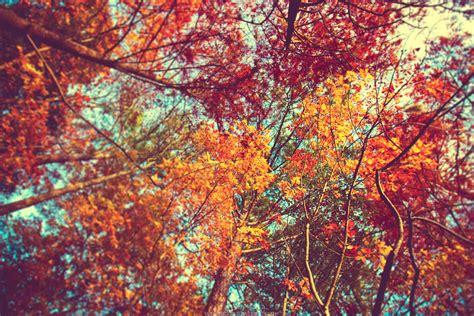 Fall Desktop Backgrounds Autumn Wallpaper by Desktop Wallpaper Autumn Leaves 65 Images
