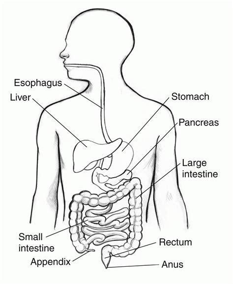 worksheets digestive system for worksheets