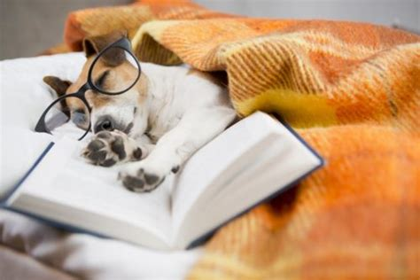 Sleep In Mandarin by 5 Resources For Learning Mandarin Chinese While You Sleep