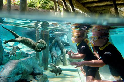 Discovery Cove Orlando: Orlando Attractions Review   10Best Experts and Tourist Reviews