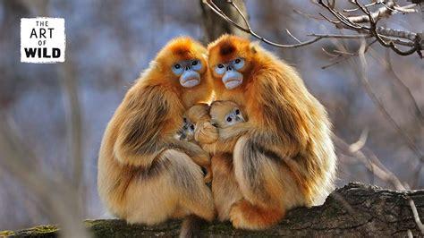 art  wild thomas marent wildlife photographer