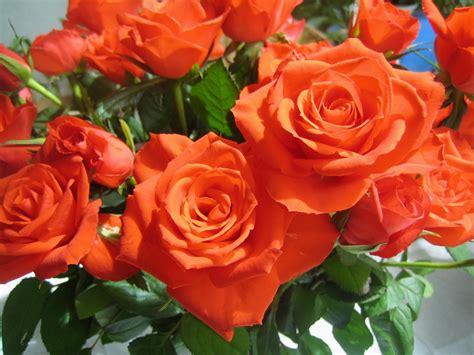 bloemen in assen bloemen beeldbank gemeente assen