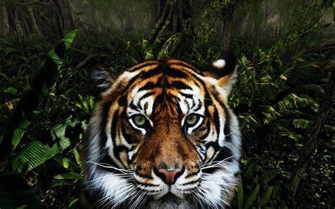 Jungle Animal Wallpaper - jungle animals wallpaper 1280x800 wallpoper 420892