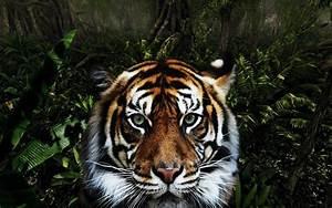 Download Jungle Animals Wallpaper 1280x800   Wallpoper #420892