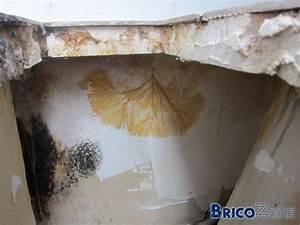 demande d39avis sur champignon dans salle de bain With moisissure carrelage salle de bain