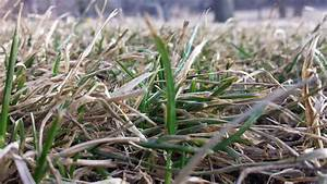 dormant grass in march omaha organics lawn