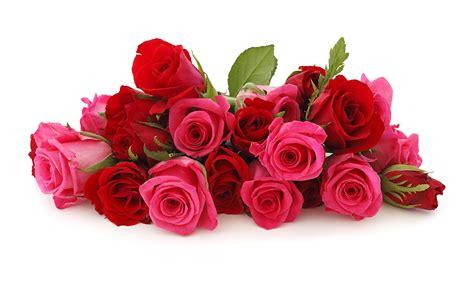 Rose Flower Wallpapers Hd  Wallpaper Cave