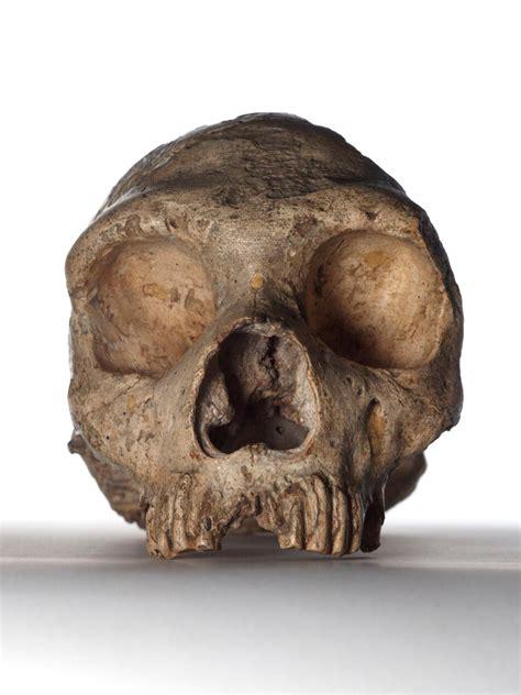 neanderthals large eyes led   downfall  study