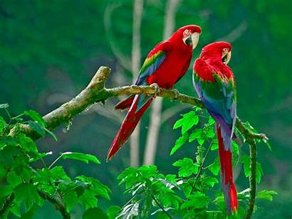 Birds Couple Lorikeet Wallpapers13