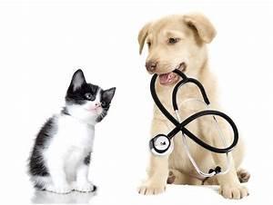 Puces, tiques... de nouveaux traitements pour chien et ...
