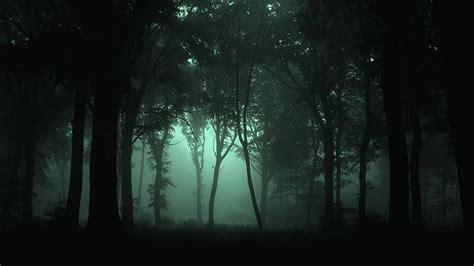 Dark Forest Wallpapers High Resolution Background 1 Hd