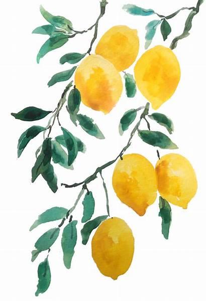 Painting Lemon Watercolor Yellow Beginners Easy Simple