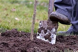Bäume Umpflanzen Jahreszeit : pflanzen umtopfen tipps ~ Orissabook.com Haus und Dekorationen