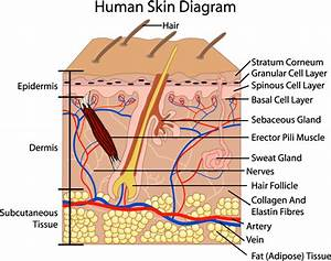Bma      Skin