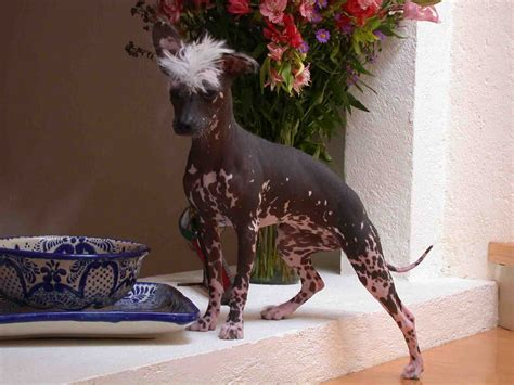Solitary Dog Sculptor I Animals  Ee  Dogs Ee   Perros
