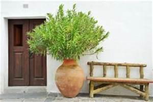 Oleander Draussen überwintern : schildl use am oleander so werden sie sie los ~ Eleganceandgraceweddings.com Haus und Dekorationen