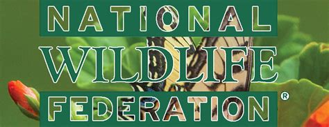 Nwf Asks Americans To Pledge To Be Butterfly Heroes. Cooling Tower Calculations Dentist In Albany. Oriental Rug Cleaning Fort Lauderdale. Cintas Shredding Service Distance Mba Ranking. Customized Holiday Card Trailer Support Jacks. Riverside County Family Law Garza Law Firm. Prostatitis Blood In Semen Heart Burn Relief. Ford Technical Service Bulletin. Dentist In North Richland Hills Tx