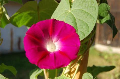 Die Schönste Farbe Der Welt by Die Sch 246 Nste Blume Der Welt