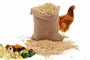 Nourriture Poule Pondeuse Pas Cher : comparatif de l 39 alimentation des poules poulailler ~ Melissatoandfro.com Idées de Décoration