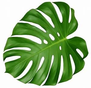 monstera leaf | Tumblr
