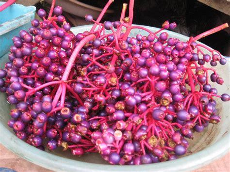 jual beli buah parijoto penyubur kandungan alami