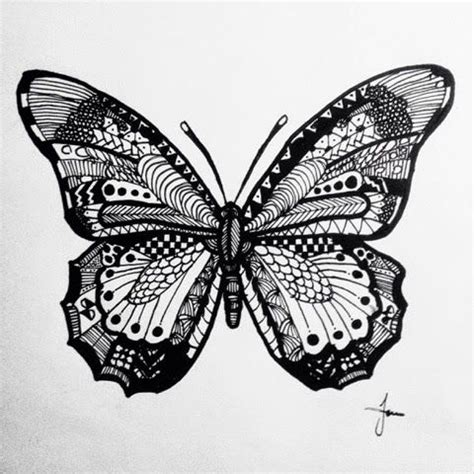 butterfly zentangle image butterfly drawing