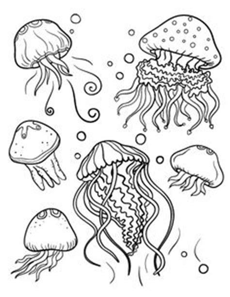 jelly fish coloring pages jellyfish scyphozoa