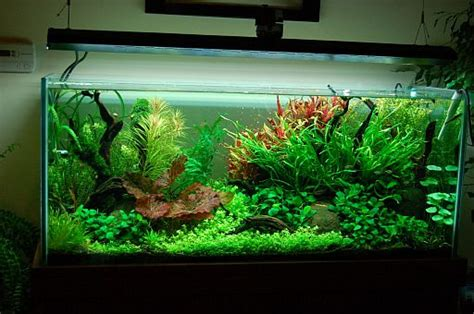 lighting in planted aquariums